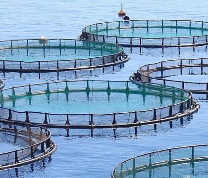 Mycotoxins in Aquaculture: How to Avoid Losing Fish, Feed & Profits