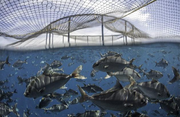Probiotics vs. Enzymes: Understanding Your Aquaculture Products